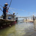 Fishermen On Boat In Hoi An Bring In Catch