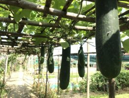 HOI AN'S RURAL LIFE AND COOKING AT ORGANIC FARM